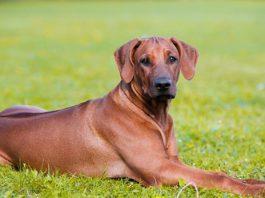 Bảo hiểm chó nuôi